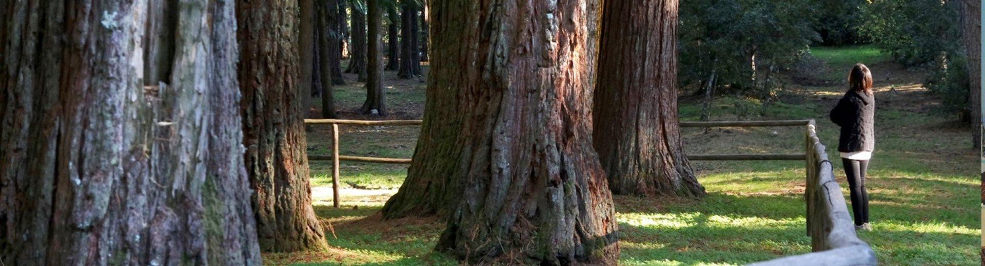 slide03_sequoie_tempio_1920
